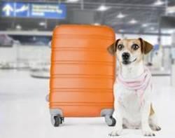 Etihad Airways claves para viajar con tu mascota