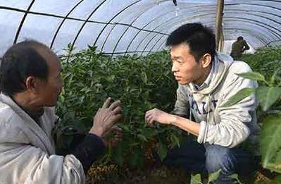 Unos siete millones de chinos se plantean retornar al campo para emprender negocios