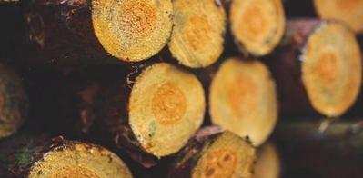 Las subastas de madera generan 32 millones de euros en España