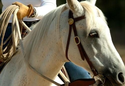 9e98d6ab4 Comprar material de equitación online