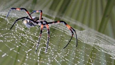 Exploran las posibilidades de la seda de araña