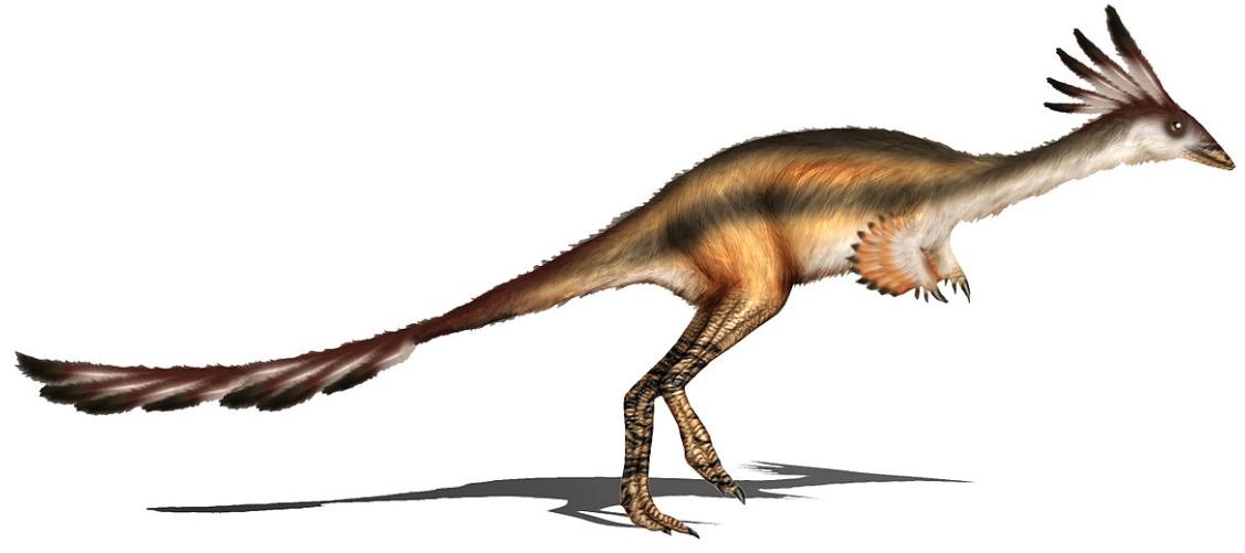 Descubren En Xinjiang Dos Nuevos Dinosaurios Parecidos A Las Aves El Mundo Financiero El ejemplar encontrado debió vivir aproximadamente hace unos 86 millones de años. nuevos dinosaurios parecidos a las aves