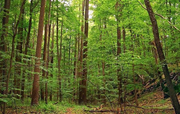 Beijing convertirá un vertedero en un parque forestal