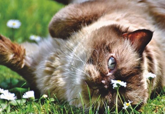 Gatos que valen una fortuna