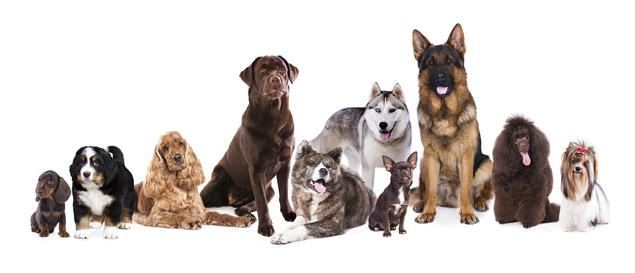 ACW Alianz Canine Worldwide celebra su 30º aniversario en Marina d'Or
