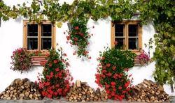 Te decimos cómo construir tu propio jardín en casa