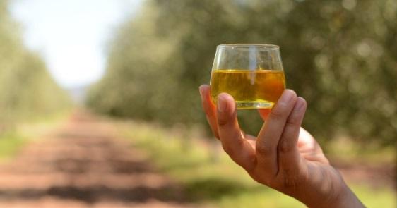 La subida de la cosecha de aceite de oliva de los países mediterráneos compensa la bajada de España
