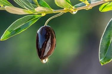 La internacionalización del sector oleícola en España: exportamos aceite de oliva pero también las máquinas para su elaboración