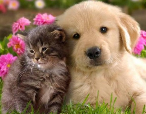 ¿Es más barato tener un perro o un gato?