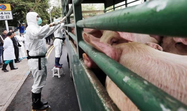 China tira de su reserva de carne de cerdo para contener los precios