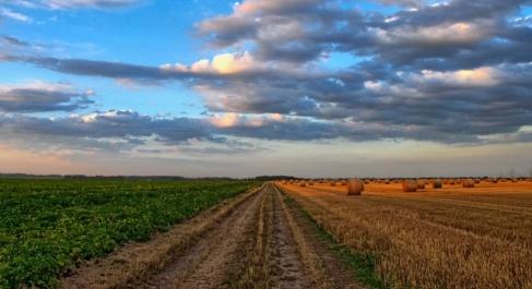 Cómo está afectando el cambio climático a la economía agrícola en España