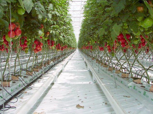 La agricultura 4.0 llega a Barcelona de la mano de Smart Farming Labs