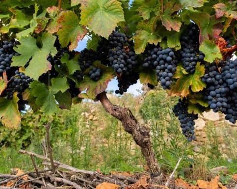 La FEV aplaude el acuerdo que pone fin a los aranceles extraordinarios al vino y agradece apoyo de eurodiputados y congresistas